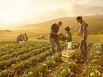 CAPORALATO A Reggio e nella Bat insediata la Rete del lavoro agricolo di qualità