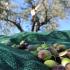 CAPORALATO, Rete del Lavoro agricolo di qualità, a Macerata e Grosseto già operative le sezioni territoriali