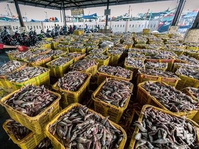 Pesca, supermercati inglesi firmano la Carta per la trasparenza di EJF