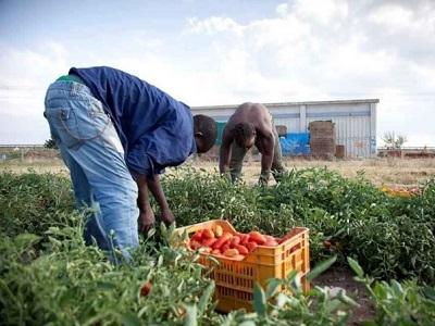 Pomodoro, prove di filiera etica